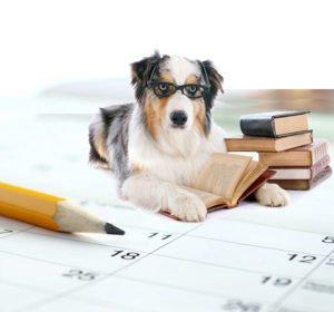 Dog and calendar