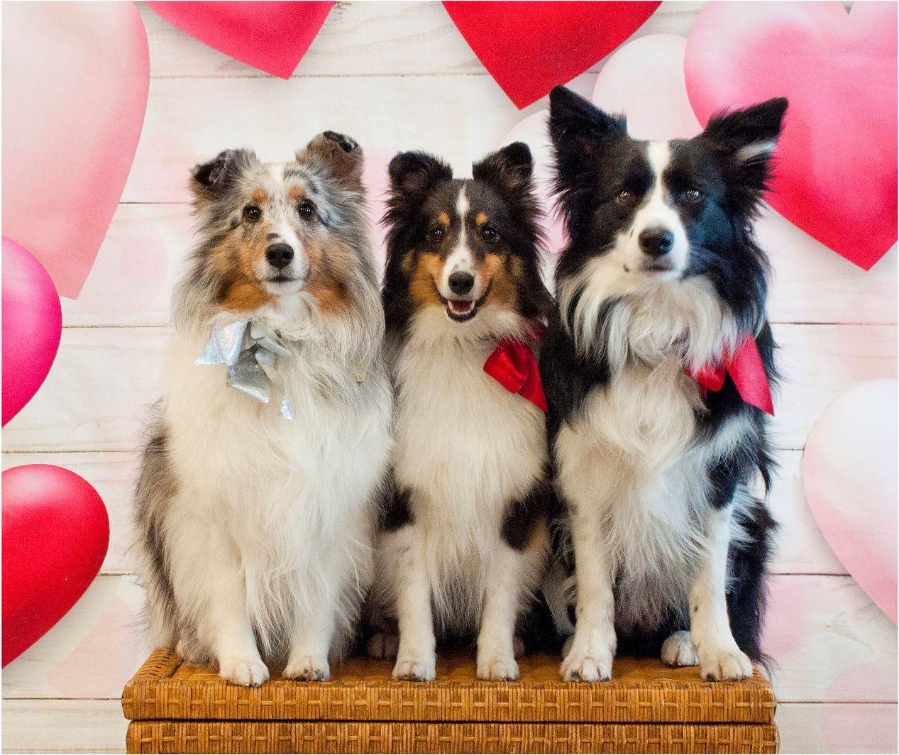 Kip's Dogs:  Palafox, Navarre, and Cordova Mall
